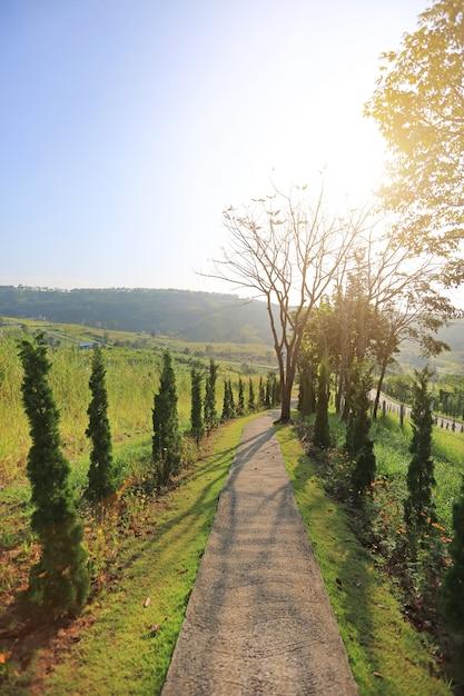 Passerelle à flanc de colline avec le soleil du matin. Photo Premium