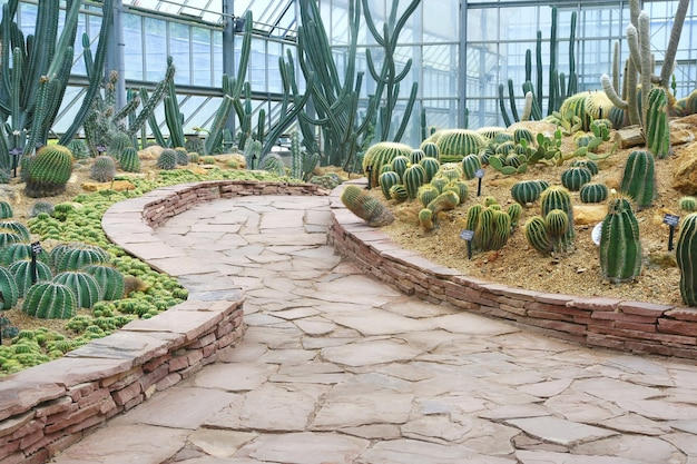 Passerelle et jardin de cactus Photo Premium