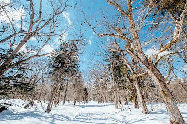 Passerelle avec neige et arbre sec, japon Photo gratuit