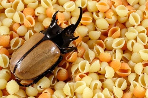 Pâtes coléoptère Photo gratuit