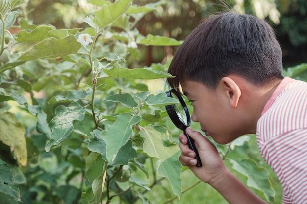 , pathologie végétale Photo Premium