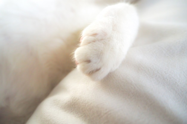 Patte de chat blanc adorable adorable animal de compagnie au lit sentiment de fond idée de vacances Photo Premium