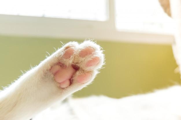 Les pattes d'un chat qui dort confortablement. Photo Premium