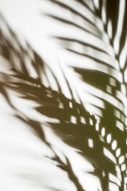 Paume défocalisé laisse ombre sur fond blanc Photo gratuit