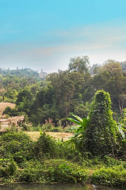Pays forestier à pai Photo Premium
