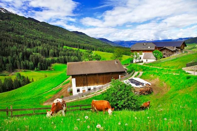 Paysage Alpin, Pâturages D'herbe Verte Et Vaches (dolomites), Nord De L'italie Photo Premium