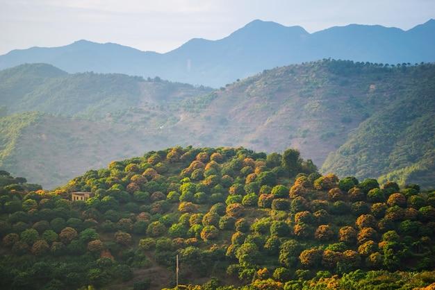 Paysage avec des arbres fruitiers en fleurs Photo gratuit