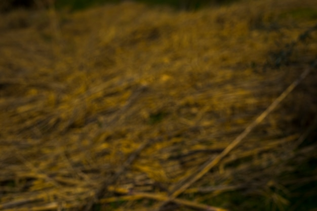 Paysage en arrière-plan flou Photo gratuit