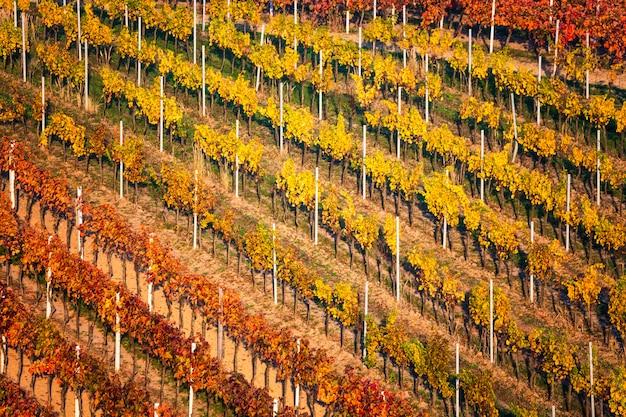 Paysage D'automne Avec Des Vignes Colorées. Vignobles De La Moravie Du Sud En République Tchèque. Photo Premium