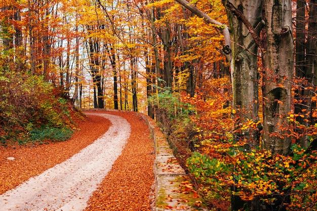 Paysage D'automne Photo Premium