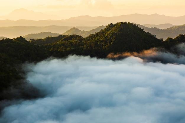 Paysage brumeux avec forêt de sapins Photo Premium