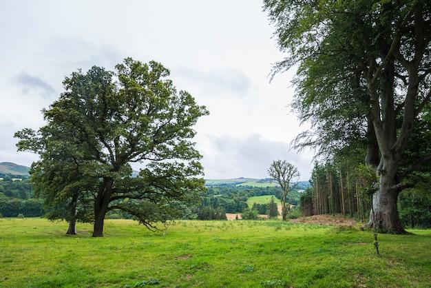 Paysage calme et verdoyant dans le parc wicklow Photo Premium