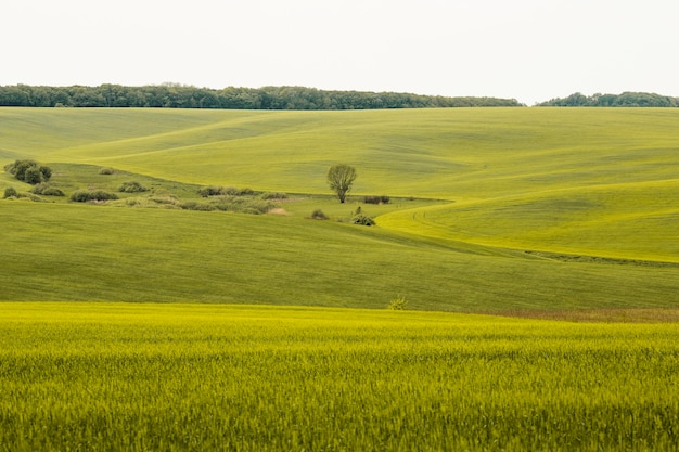 Paysage De Campagne Agricole Photo Premium