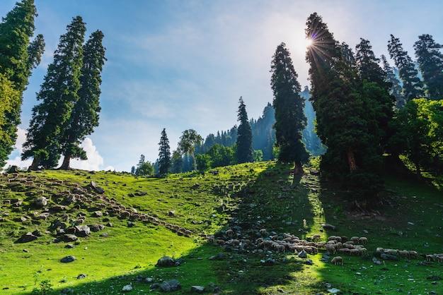 Paysage de campagne naturel pittoresque, avec un groupe de moutons se promenant dans les pâturages Photo Premium