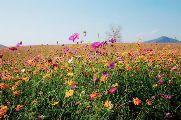 Paysage de champ avec un ciel bleu Photo Premium