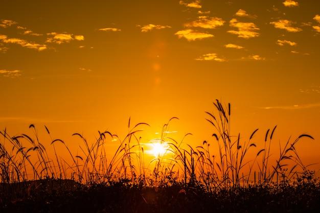 O lumineux matin - Anna de Noailles Paysage-colore-au-moment-du-matin-silhouette-herbe-fond-premier-plan-lever-brouillard_44353-825