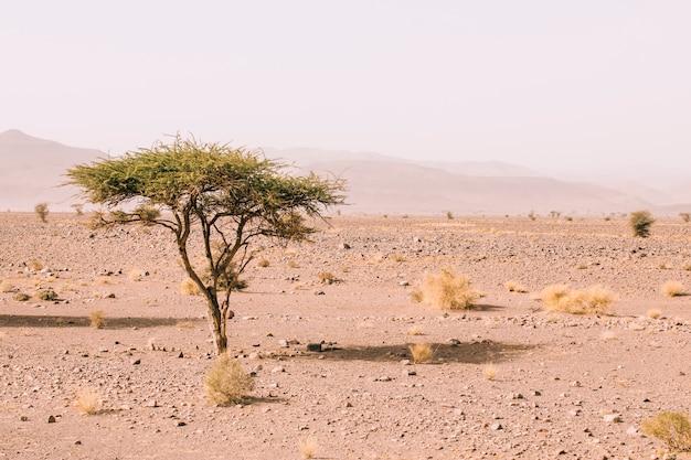 Paysage désertique au maroc Photo gratuit