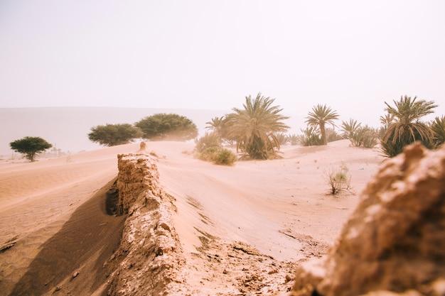 Paysage désertique Photo gratuit