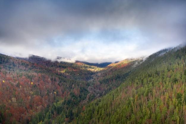 Paysage Du Matin D'automne Malvonic. Rayons De Soleil Longues Ombres Et Brouillard Matinal Sur La Forêt. Photo Premium