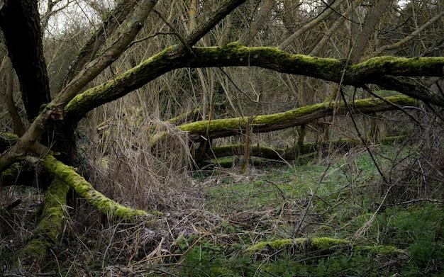 Paysage Effrayant Dans Une Forêt Avec Des Branches D'arbres Sèches Couvertes De Mousse Photo gratuit