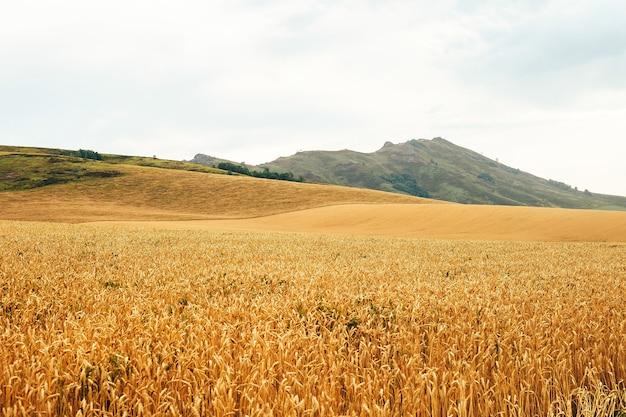 Paysage d'été avec champ de blé et nuages Photo Premium