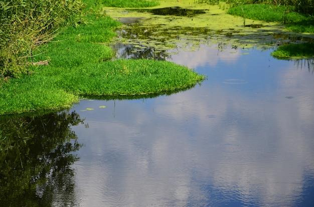 Paysage d'été avec un grand marais parsemé de lentilles vertes et de végétation de marais Photo Premium