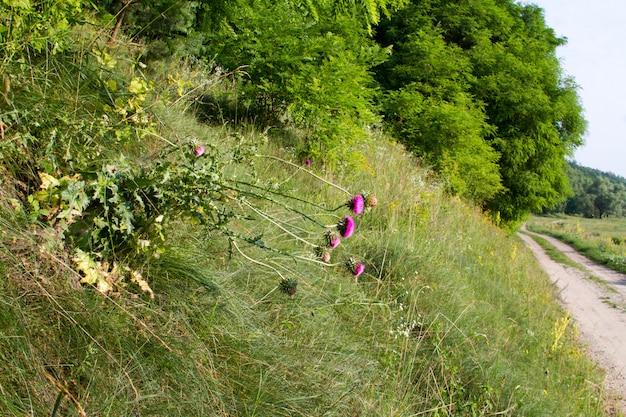 Paysage d'été avec une prairie herbeuse et une route allant dans la forêt Photo Premium