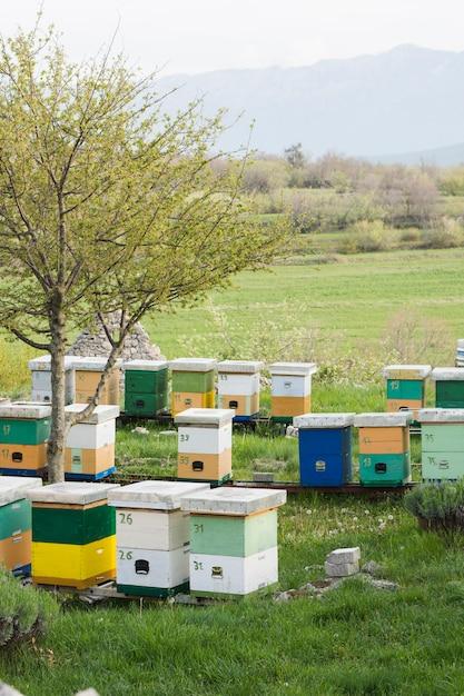 Paysage de la ferme de miel Photo gratuit