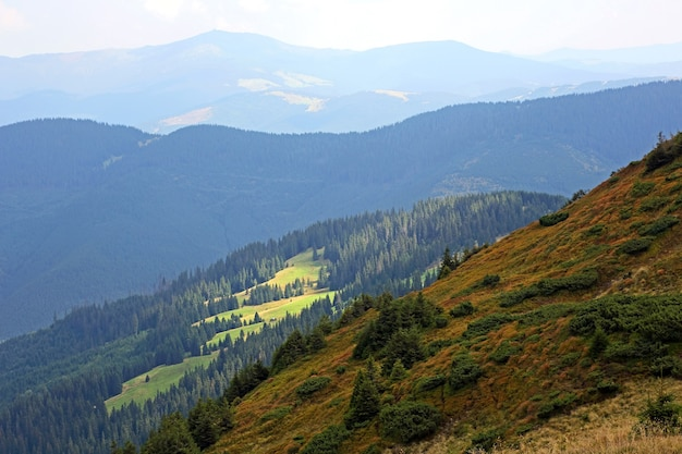 Paysage Forestier Dans Les Montagnes Des Carpates Photo Premium