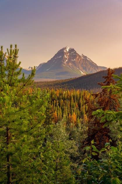 Paysage Forestier Du Canada Avec La Grande Montagne En Arrière-plan Photo Premium