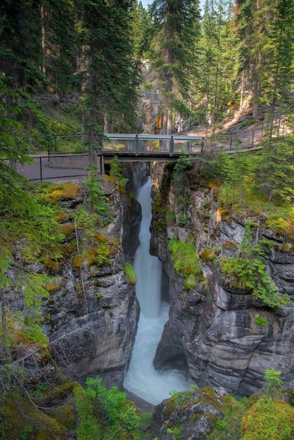 Paysage Forestier Du Canada Avec Pont Et Forêt à L'arrière-plan, Alberta Photo Premium