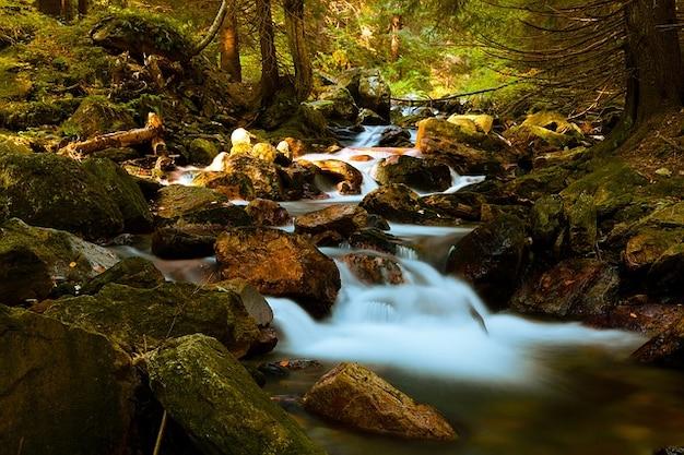 Paysage forêt automne chaud automne belle forêt Photo gratuit