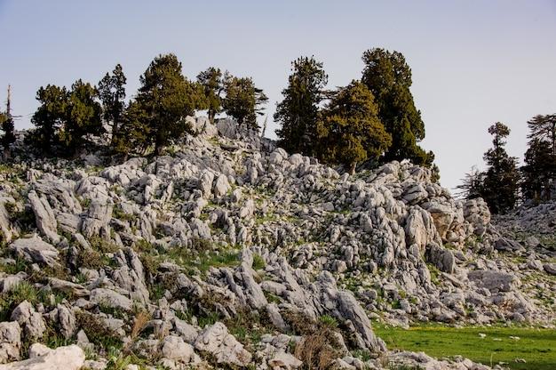 Paysage de forêt dans les hautes terres en turquie Photo Premium