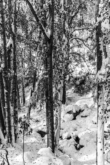 Paysage D'une Forêt Entourée D'arbres Couverts De Neige Pendant La Journée Photo gratuit