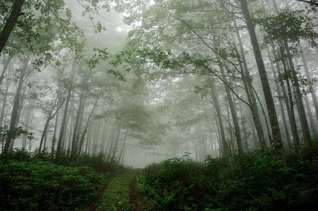 Paysage de la forêt profonde couverte de brouillard Photo Premium