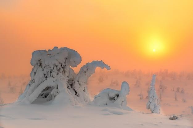 Paysage d'hiver avec des arbres couverts de neige dans la forêt d'hiver. Photo Premium