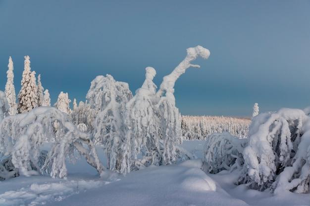 Paysage d'hiver avec des arbres couverts de neige dans la forêt d'hiver Photo Premium