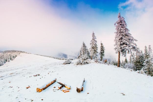 Paysage d'hiver des arbres en gelée Photo Premium