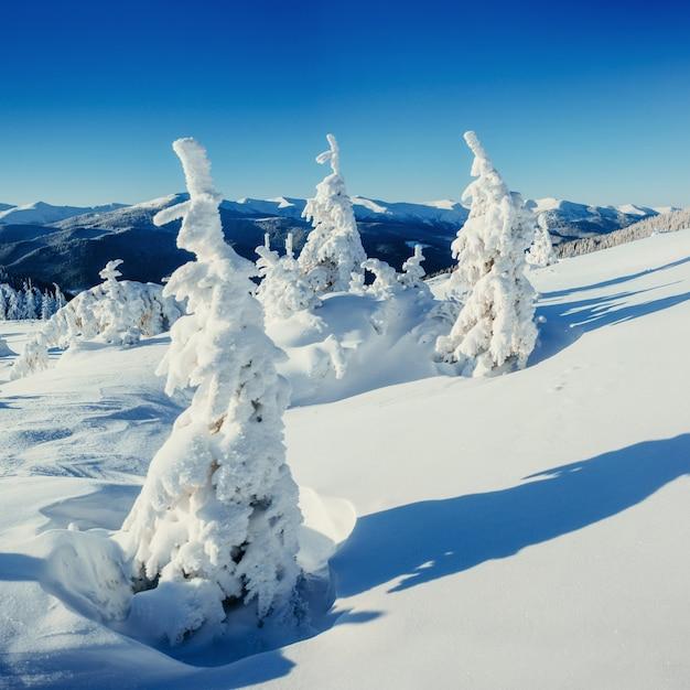 Paysage D'hiver Fantastique Et Arbre En Givre. Photo gratuit