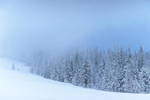 Paysage D'hiver Fantastique. La Veille Des Vacances. La Scène Dramatique. Carpates, Ukraine, Europe. Bonne Année Photo gratuit