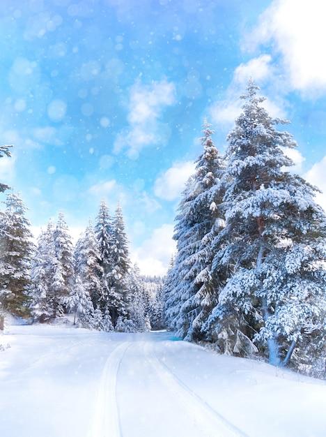 Paysage D'hiver Avec Forêt Enneigée Et Route. Monde De Neige. Montagnes Des Rhodopes, Bulgarie Photo Premium