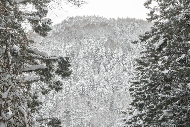 Paysage D'hiver De La Forêt De Pins Photo Premium