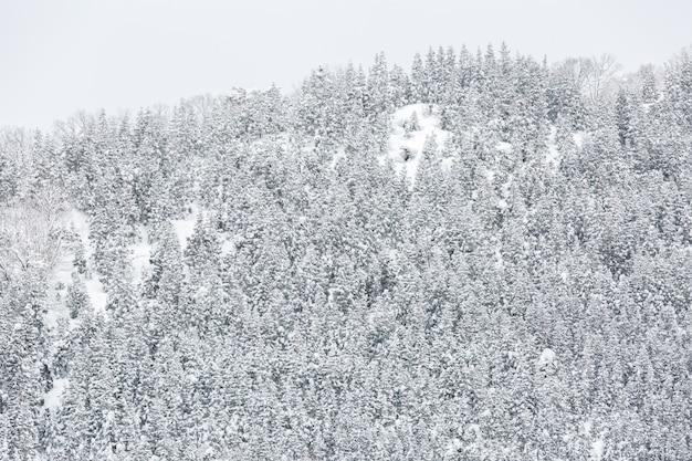 Paysage D'hiver Photo Premium