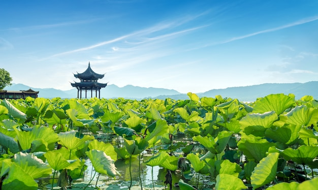 Paysage de lac de la chine hangzhou ouest Photo Premium