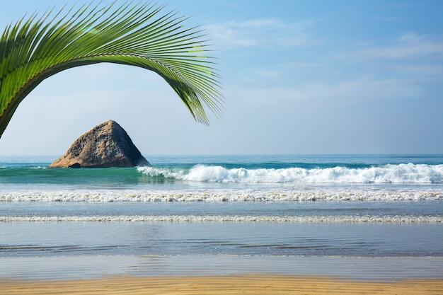 Paysage Marin Avec Feuille De Palmier Photo Premium