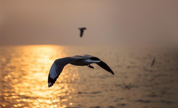 Paysage marin d'oiseau volant au coucher du soleil Photo Premium