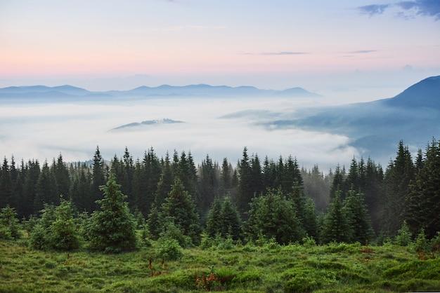 Paysage De Montagne Des Carpates Brumeuses Avec Forêt De Sapins, La Cime Des Arbres Sortant Du Brouillard. Photo gratuit