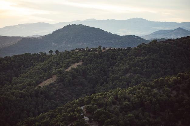 Paysage de montagnes avec forêt remplie de gens Photo gratuit