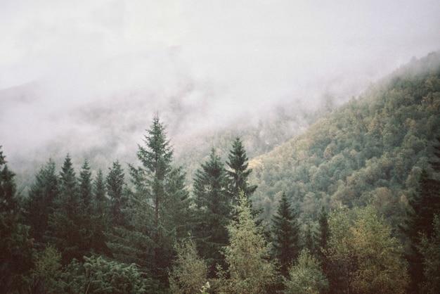 Paysage naturel de montagnes et de forêts Photo gratuit