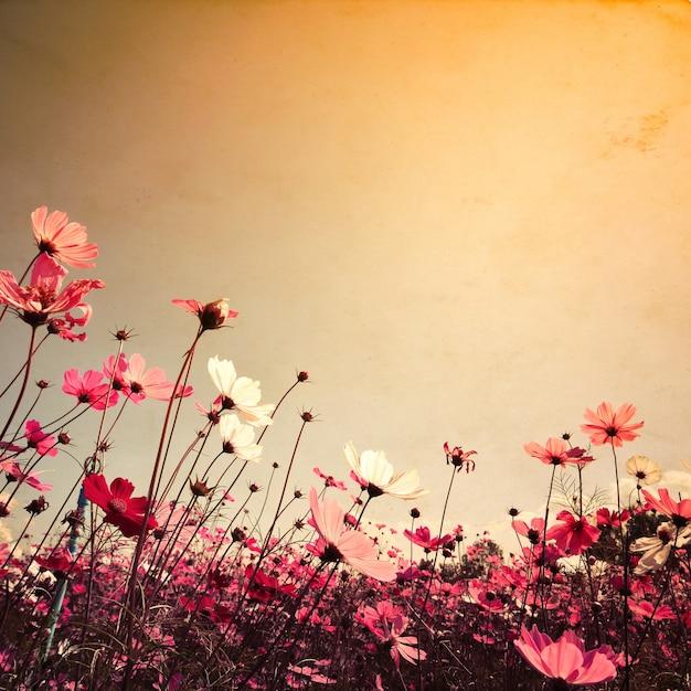 Paysage De Paysage Vintage De Fond Du Magnifique Champ De Fleurs Du